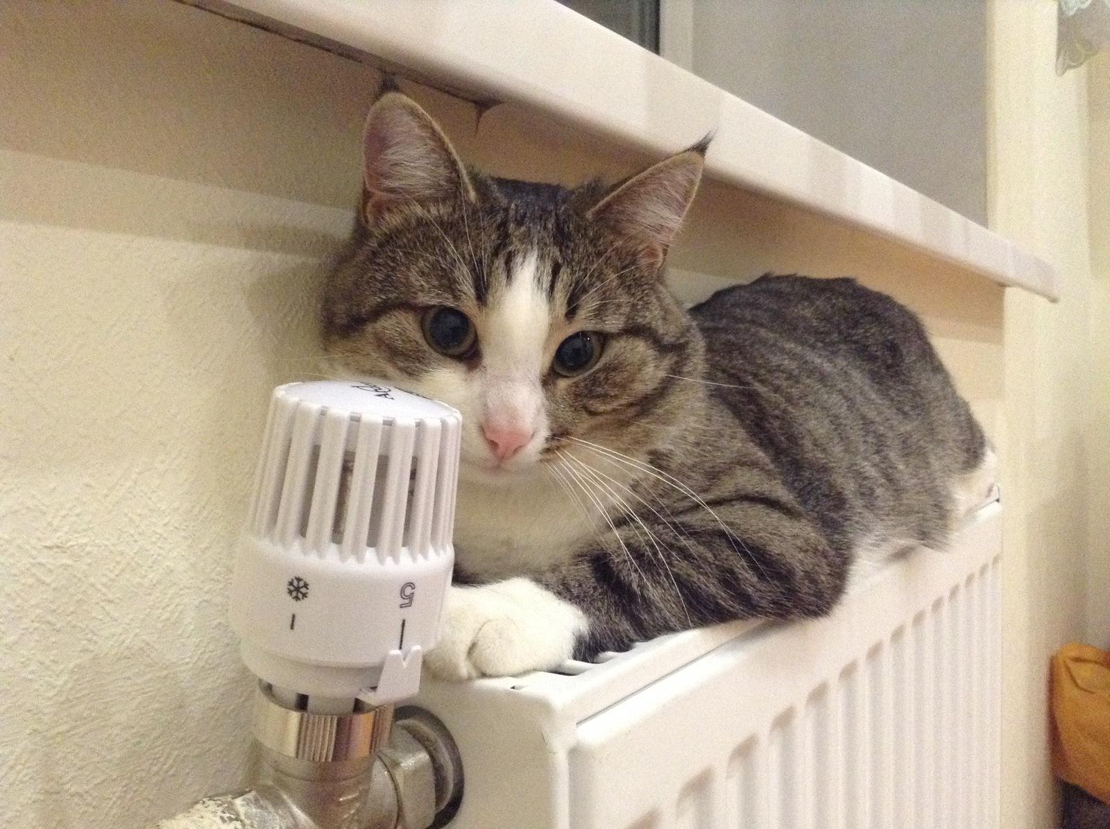 В Марий Эл открыли «горячую линию» о тепле в домах - ГТРК Марий Эл 13.10.2020